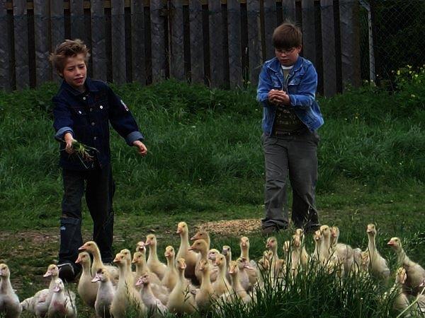 Besuch auf einem Bauernhof