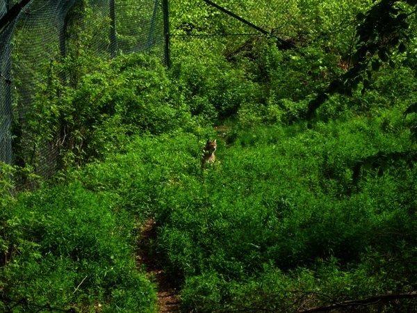 Ein Tag im Harz