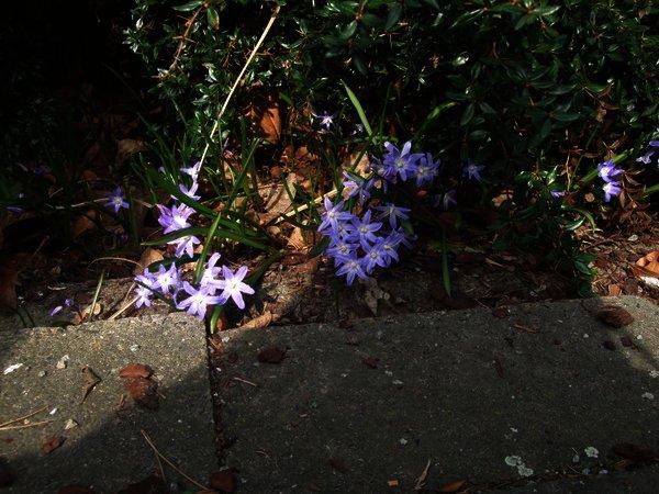 Frühlingserwachen in der Moselstraße